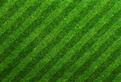 Green grass soccer field Royalty Free Stock Image