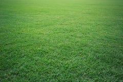 Green grass soccer field background. Beautiful pattern of fresh green grass for football sport, football field, soccer field, team sport texture stock photos