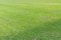 Green grass of soccer field Royalty Free Stock Photo