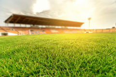 Green grass in soccer stadium with light flare. Stock Images