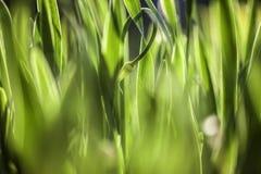 Green grass. Soft focus Stock Photo