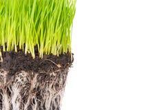 Green grass and soil Stock Photos