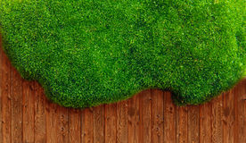 Green grass and soil Stock Image