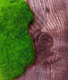 Green grass and soil Stock Photography