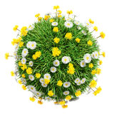 Green grass sphere with flowers Stock Photo