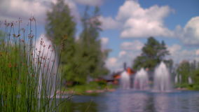 Green grass spike on lake bank. Nature landscape. Closeup of green grass spikes stock footage