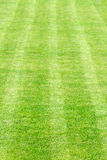Green grass sport field Royalty Free Stock Images