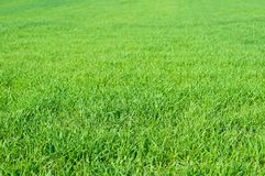 Green grass in spring as natural background Royalty Free Stock Image