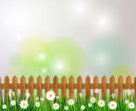 Green grass spring background. On a bokeh background with white flowers and wooden fence Stock Photo