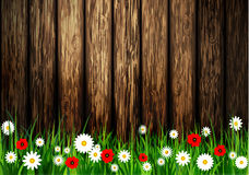 Green grass spring background Royalty Free Stock Images