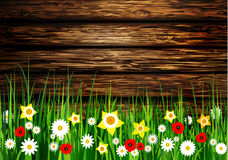 Green grass spring background. On a wooden background with white flowers and Daffodils Royalty Free Stock Photo
