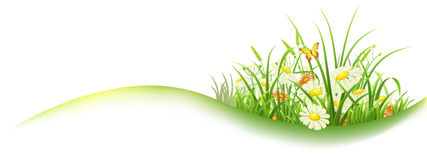 Green grass spring banner. Spring banner with green grass and flowers, vector illustration Royalty Free Stock Photos
