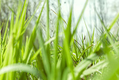 Green grass on spring day Stock Photo