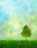 Green grass spring fantasy Stock Images
