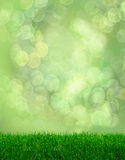 Green grass spring fantasy bokeh Stock Photography