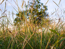 Green grass on spring Royalty Free Stock Image
