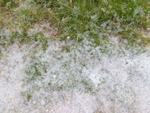Green grass in the spring Poplar fluff Royalty Free Stock Images