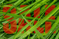 Green Grass Spring Sale Design Royalty Free Stock Photos