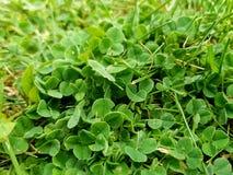 Green grass. Spring summer park garden nature field meadows stock image