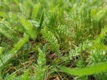 Green grass. Spring summer park garden nature field meadows stock photography