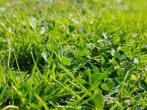 Green grass texture. Green grass spring summer park garden nature field meadows texture royalty free stock images