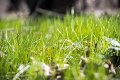 Green grass in spring in the sunbeams. Stock Photo