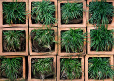 Green grass on square pot Stock Images