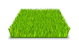 Green grass. Square realistic isolated vector illustration royalty free illustration
