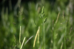 Green grass stalks Stock Photos