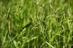 Green grass stalks Stock Photography