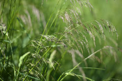 Green grass stalks Stock Images