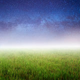 Green grass and Star night Royalty Free Stock Photography