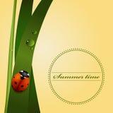 Green grass, stem, dew drops, cute ladybug. Summer season. Royalty Free Stock Photos