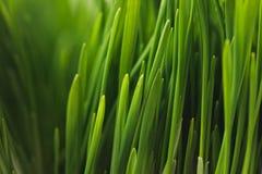Green grass stems. Full frame of green grass stems Stock Photos