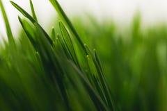 Green grass stems. Full frame of green grass stems Royalty Free Stock Image