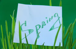 Green grass with a sticker Spring Stock Photo
