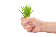 green grass sticks out from the women fist Stock Photography