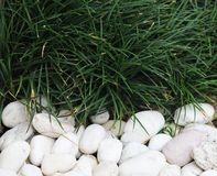 Green grass and stone Stock Photo