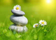 Green grass with stones and daisies Stock Image