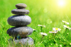 Green grass with stones and daisies Royalty Free Stock Photography