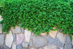 Green grass and stones wall royalty free stock image