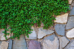 Green grass and stones wall royalty free stock photography