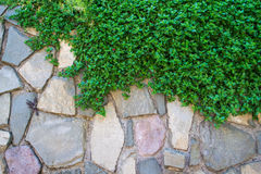 Green grass and stones wall Stock Photos