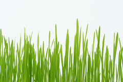 Green grass straws Royalty Free Stock Images