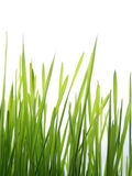 Green grass straws Stock Image