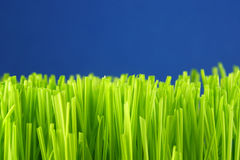 Green grass straws Stock Images
