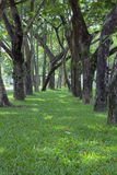 Green grass. Street Trees and green grass Royalty Free Stock Photography