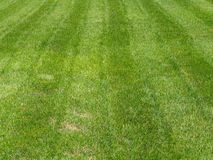 Green grass. Striped green grass lawn as background Royalty Free Stock Photography