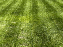 Green grass. Striped green grass lawn as background Stock Photos