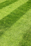 Green grass with stripes Stock Images